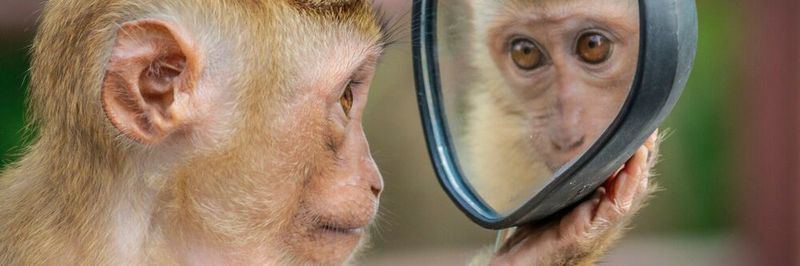 A number of chaos engineering tools are based on the idea of IT specialist Antonio Garcia Martinez that monkeys use software and provoke errors.